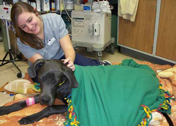 Assistant Kristin with Thunder after surgery